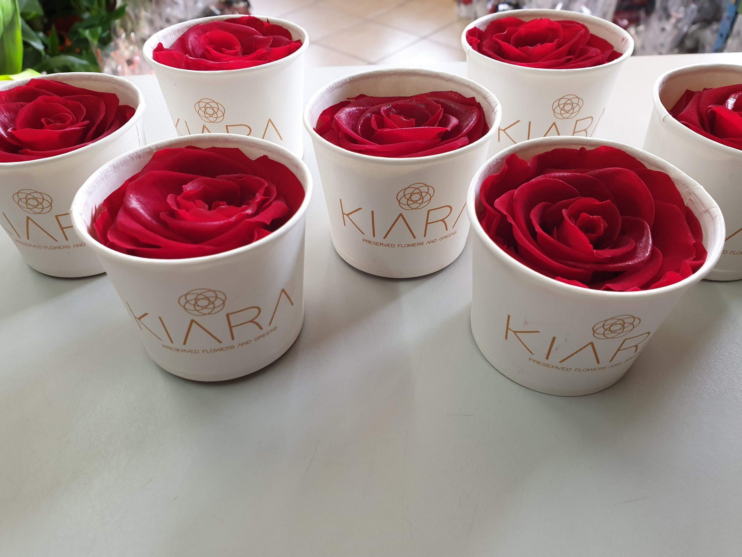 Dehidrirana ruža
