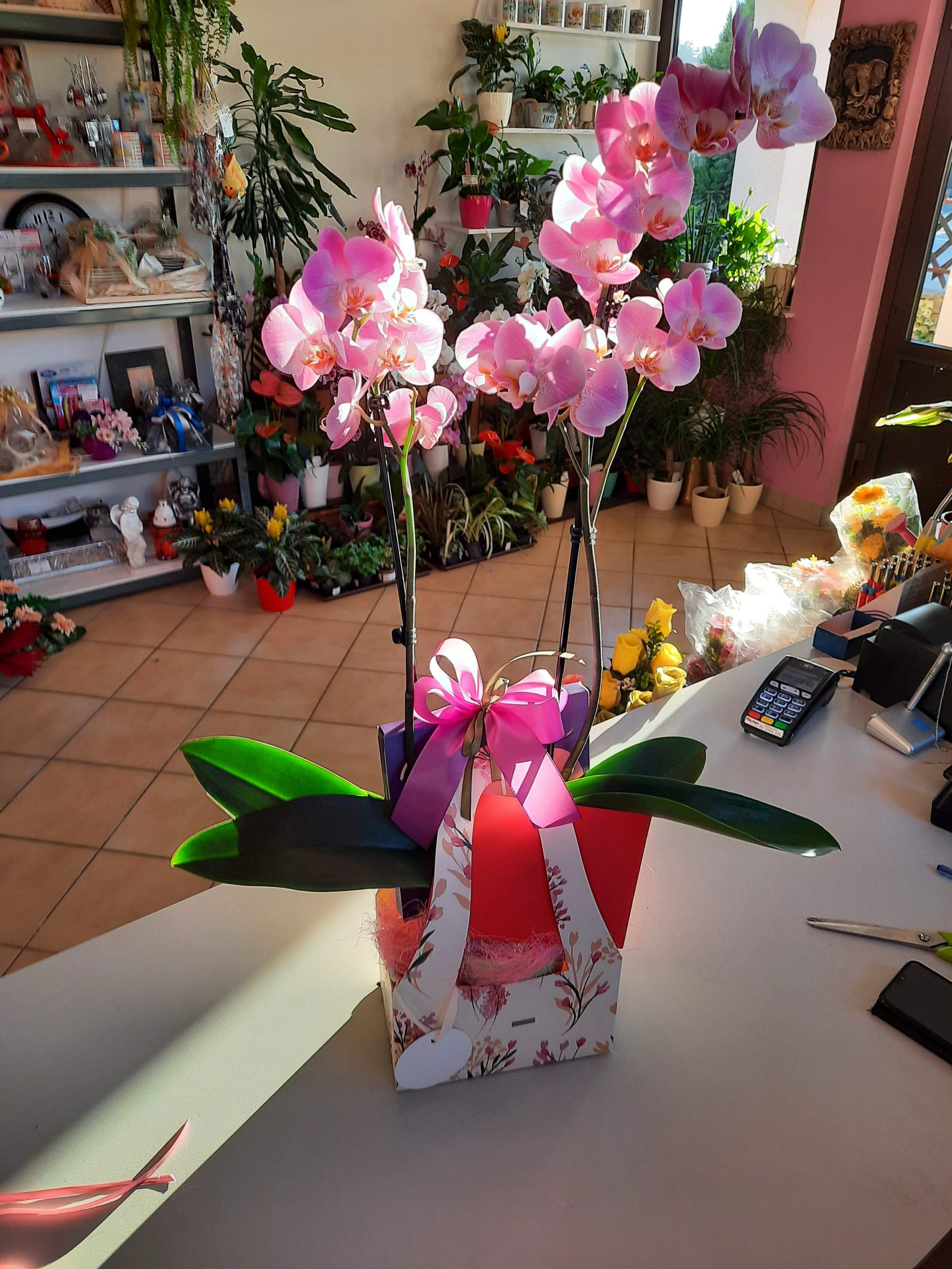 Poklon paket Orhideja